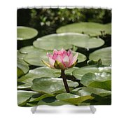 1 Open Pink Lily And 1 Opening... Shower Curtain