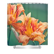 Orange Double Daylily Shower Curtain