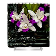 Orchid Flowers Growing Through Old Wooden Picture Frame Shower Curtain