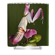 Orchid Mantis Shower Curtain