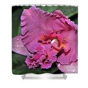 Orchid Sophrocattleya Royal Beau   H And R Shower Curtain