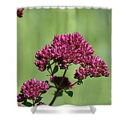 Oregano Shower Curtain