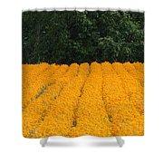 Oregon Orange Field Panoramic Shower Curtain