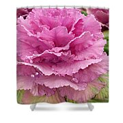 Ornamental Cabbage Shower Curtain