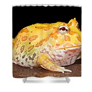 Pac Man Frog Ceratophrys Shower Curtain