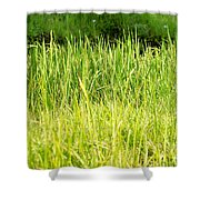 Paddy Field Shower Curtain