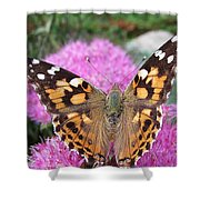 Painted Lady Butterfly Up Close Shower Curtain