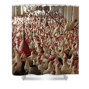 Pakistan-agriculture Shower Curtain