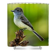 Pale-edged Flycatcher Shower Curtain