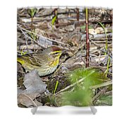 Palm Warbler Shower Curtain