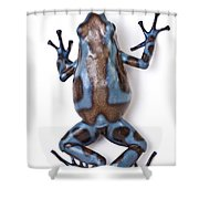 Panamanian Green And Black Poison Dart Shower Curtain