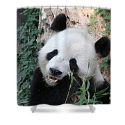 Panda Eating Shower Curtain