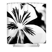 Pansy Flower Black And White 01 Shower Curtain