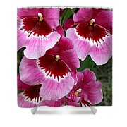 Pansy Orchid 1 Shower Curtain