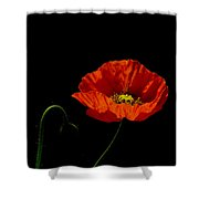 Papaver Shower Curtain