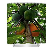Papaya Tree Shower Curtain