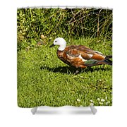 Female Paradise Duck Shower Curtain