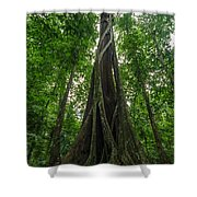 Parasite Consuming A Tree Shower Curtain
