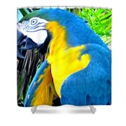 Blue Yellow Macaw. Parrot. Photo Of Bird Shower Curtain