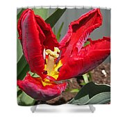 Parrot Tulip Named Rococo Shower Curtain