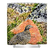 Partridge 2 Shower Curtain