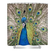 Peacock Full Plumage Shower Curtain