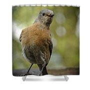 Peering Bluebird Shower Curtain