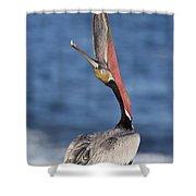 Pelican Head Throw Shower Curtain