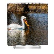 Pelican  Shower Curtain
