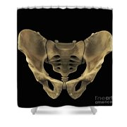 Pelvic Bones Male Shower Curtain