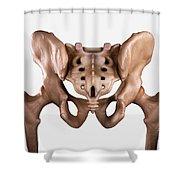 Pelvis Joints Shower Curtain