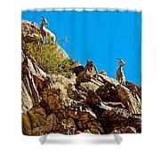 Peninsular Bighorn Sheep From Borrego Palm Canyon Trail In Anza-borrego Desert Sp-ca Shower Curtain
