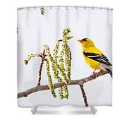 Perfect Perch Shower Curtain