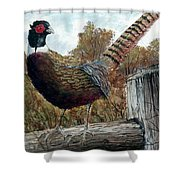 Pheasant On Fence Shower Curtain
