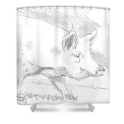 Pig Drawing Shower Curtain
