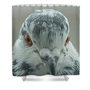 Pigeon Close-up Shower Curtain