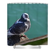 Pigeon Shower Curtain