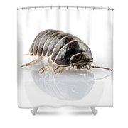 Pill-bug Armadillidium Vulgare Shower Curtain