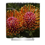 Pincushion Flowers Shower Curtain