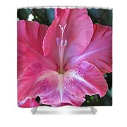 Pink And White Gladiolus Shower Curtain