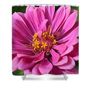 Pink And Yellow Flower Shower Curtain