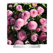 Pink Button Pom Flowers Shower Curtain