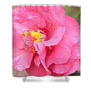 Pink Camellia Closeup With Light Shower Curtain