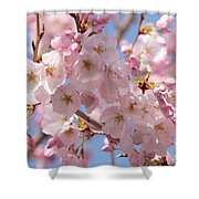Sunlight On Spring Blossoms Shower Curtain