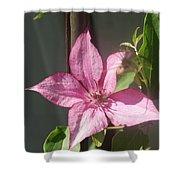 Pink  Clematis   # Shower Curtain