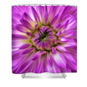 Pink Dahlia Close Up Shower Curtain