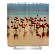 Pink Famingo Shower Curtain