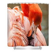 Pink Flamingo At A Zoo In Spring Shower Curtain
