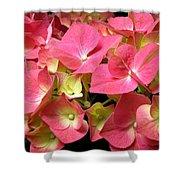 Pink Hydrangea Flowers Shower Curtain