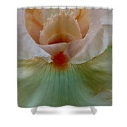 Pink Iris Shower Curtain